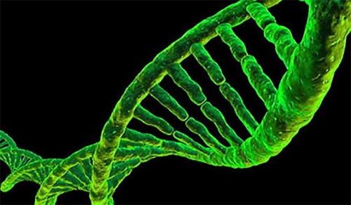 Plant-DNA-640x375